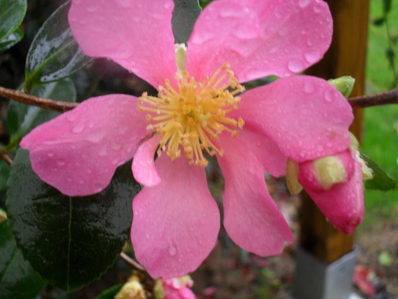 Floraisons de novembre 01410