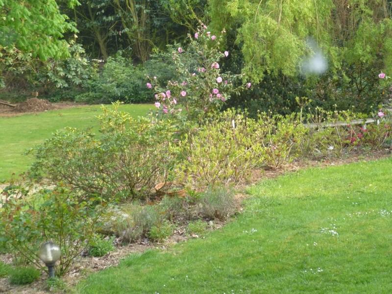 Aperçus de mon jardin Breton 01418