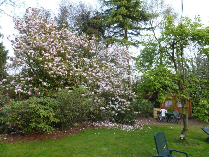 Aperçus de mon jardin Breton 01916