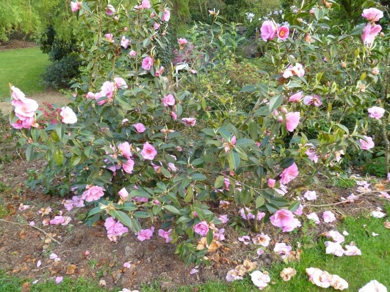 Aperçus de mon jardin Breton 02014