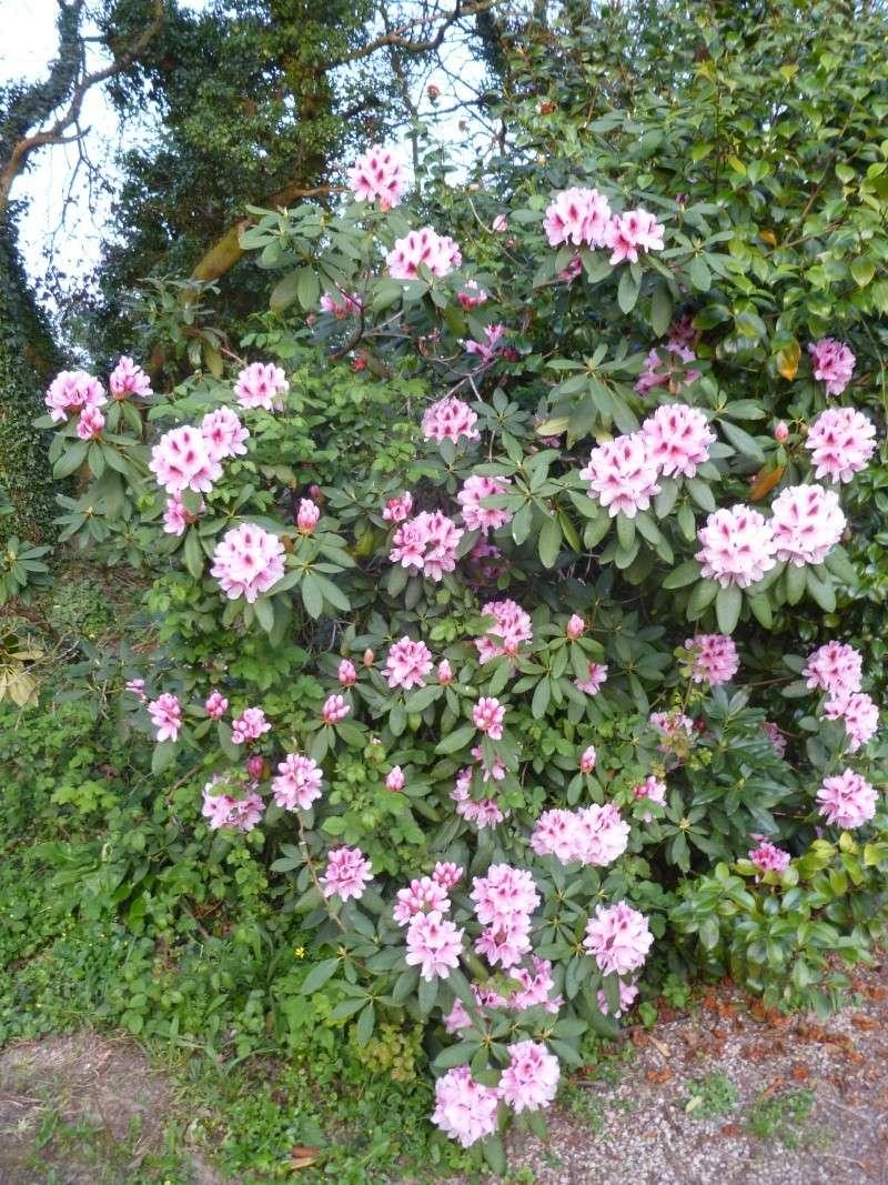 Aperçus de mon jardin Breton 02113