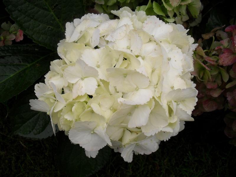 Floraisons de novembre 02510