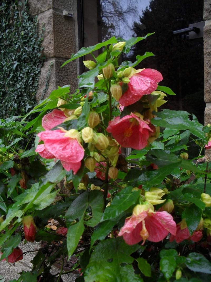 Floraisons de novembre 02910