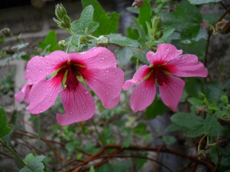 Floraisons de novembre 03010