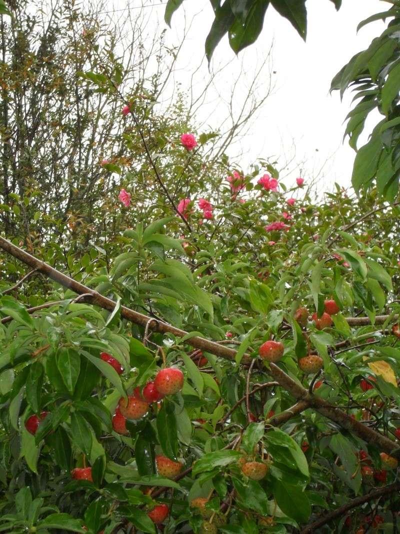 Floraisons de novembre 03110