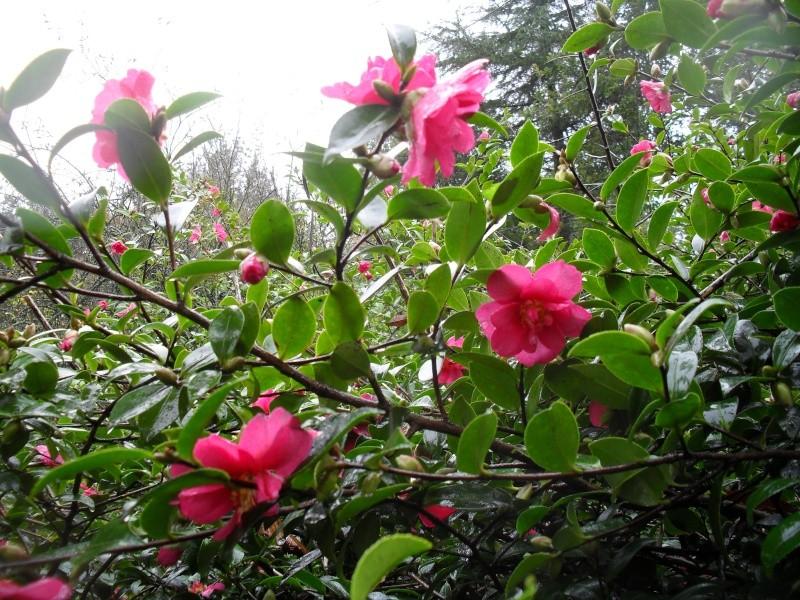 Floraisons de novembre 03510