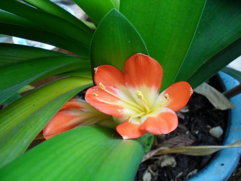 Floraisons de novembre 04410