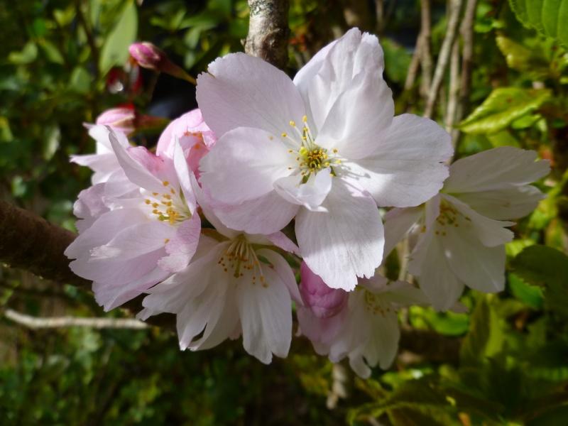 floraisons des arbres et des arbustes 05010