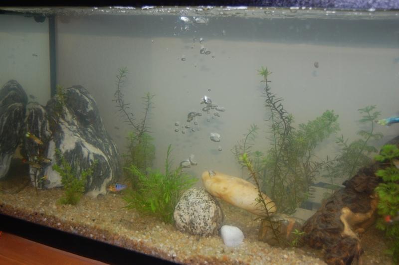 Mon Aquarium :) Dsc_3619