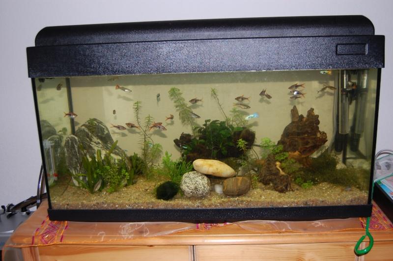 Mon Aquarium :) Dsc_3624