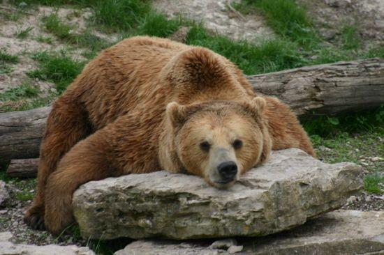 Nouvelle figure : l'Ours perdu dans la prairie Images11