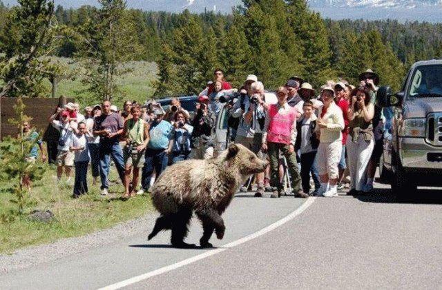 Nouvelle figure : l'Ours perdu dans la prairie Lache_10