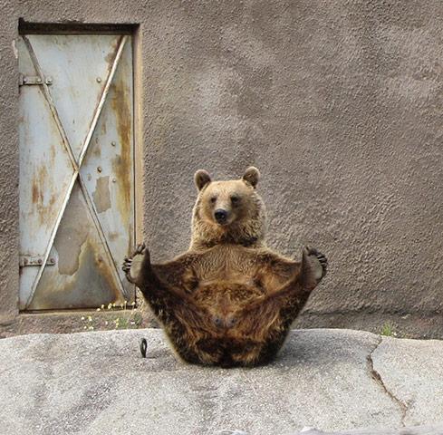 Nouvelle figure : l'Ours perdu dans la prairie Zoo-ou10