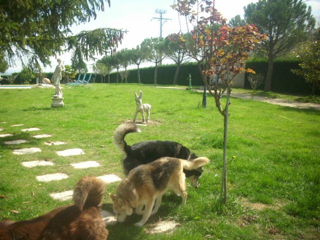 Spot, husky noir et blanc, mâle  âgé de9  ans a l'Eden Valley (26)DECEDE Feline11
