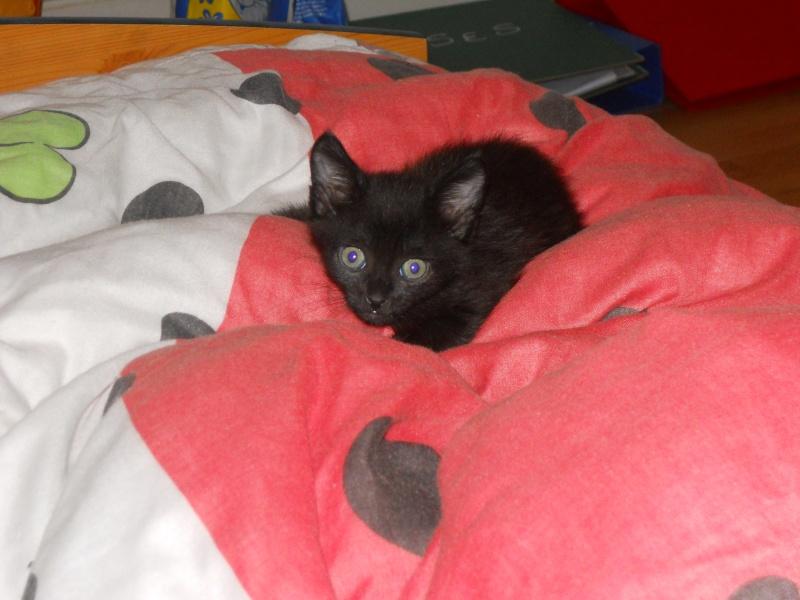 Fidji, ou le chaton hyperactif :3 Dscn9412
