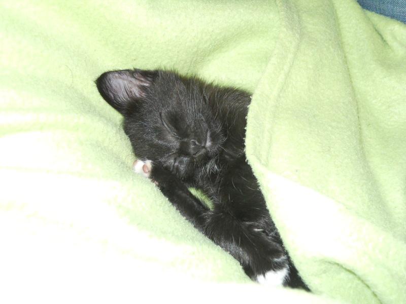 Fidji, ou le chaton hyperactif :3 Dscn9413