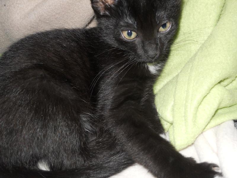Fidji, ou le chaton hyperactif :3 Dscn9610