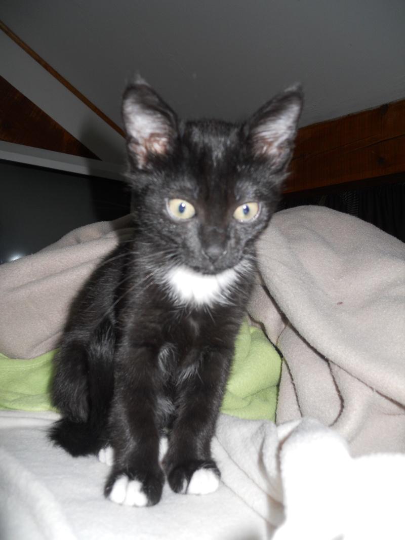 Fidji, ou le chaton hyperactif :3 Dscn9611