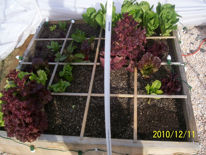 UpSo: December Lettuce 100_2610