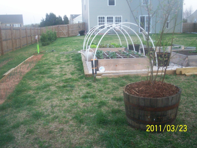 Apple trees for mid South 100_2822
