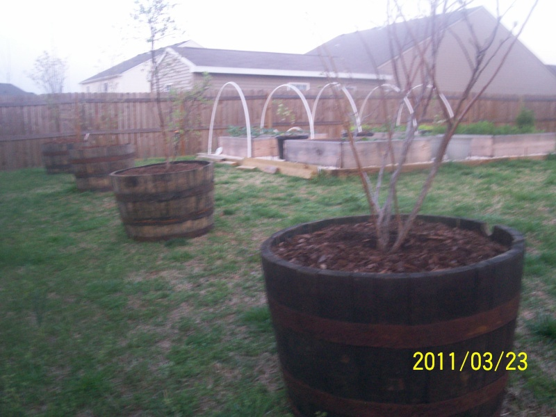 Apple trees for mid South 100_2823