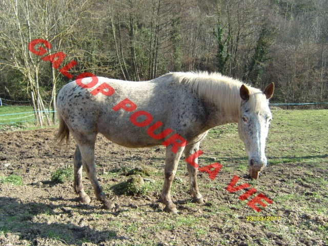 GIPSY - OI typée Appaloosa née en 1995 - Adoptée en juin 2011 par Xeudav Gypsi_11