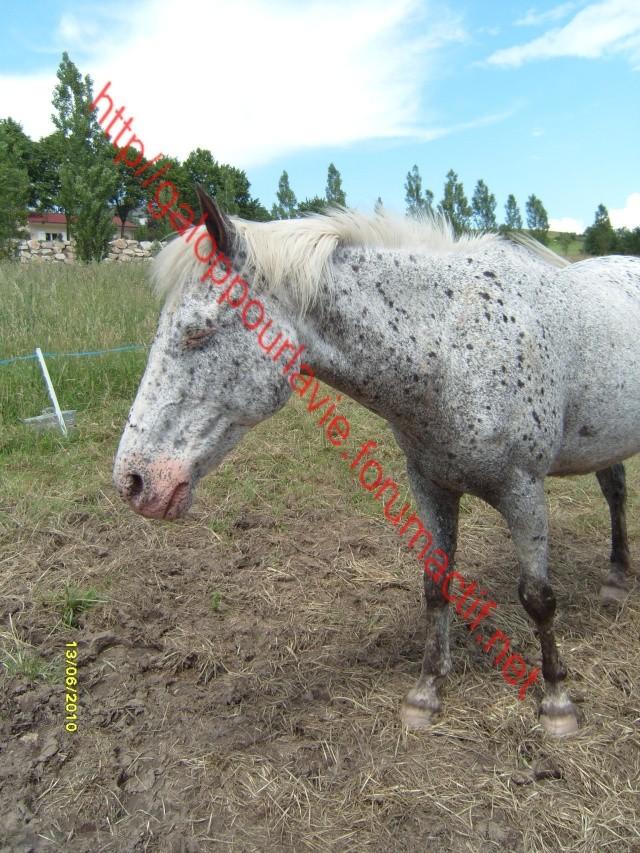 GIPSY - OI typée Appaloosa née en 1995 - Adoptée en juin 2011 par Xeudav Sl740911