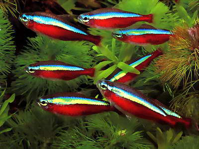 aquapassion1234 - forum aquarophilie - poisson aquarium - Portail Cheiro10