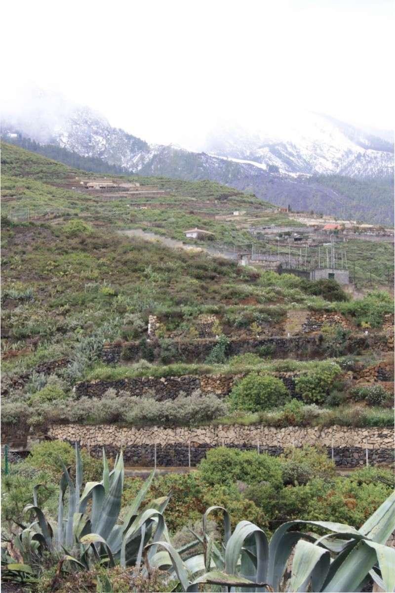 nevada vista desde el lado sur de la isla:Güímar Peq411