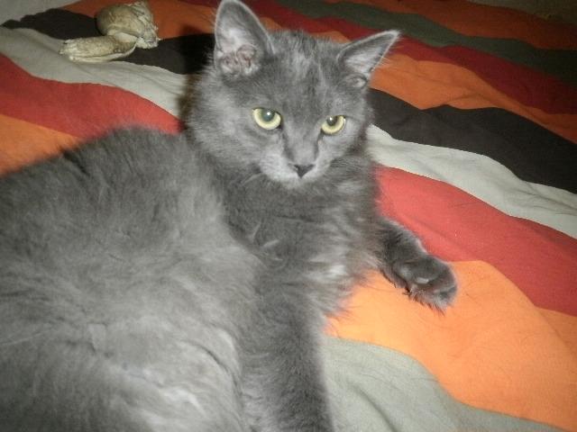 Toulouse chaton gris de 3 mois. - Page 3 Photo_29