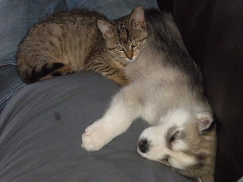 chien et chat  Noel_211