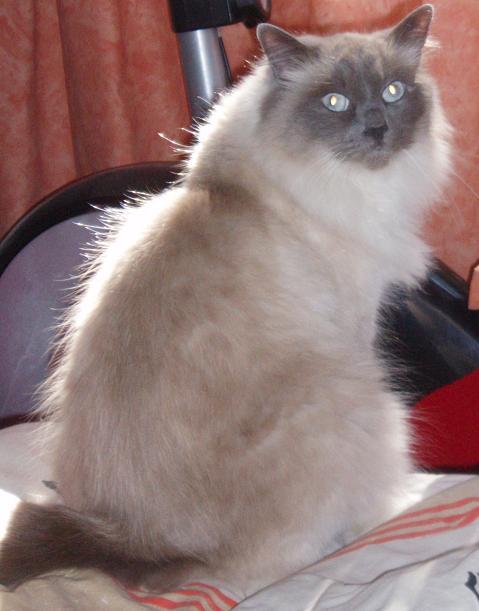 Nos zamis les chats Shapir11