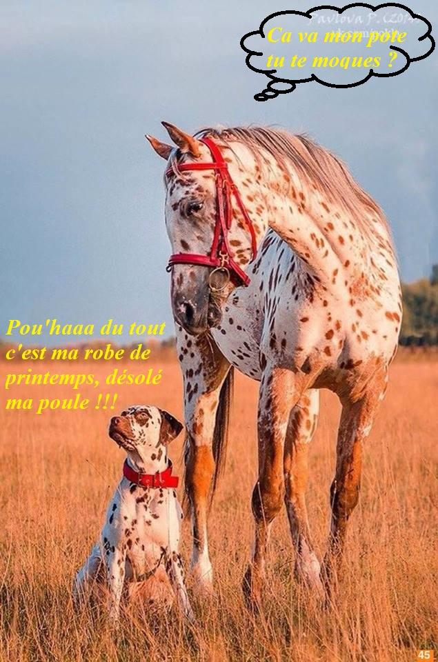 Nos amis, les animaux(quand ils font semblant d'être bête) - Page 9 12802810