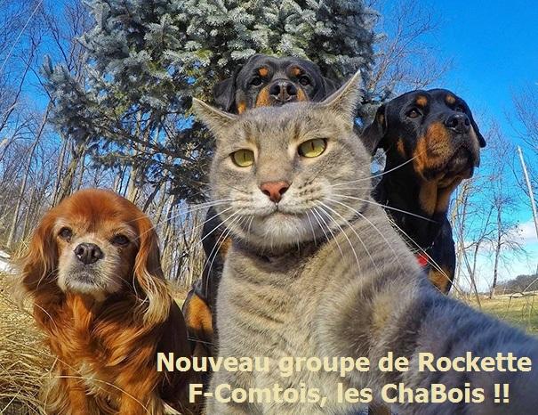 Nos amis, les animaux(quand ils font semblant d'être bête) - Page 9 Animau10