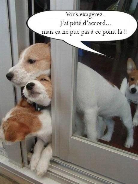 Nos amis, les animaux(quand ils font semblant d'être bête) - Page 9 Bfc77710