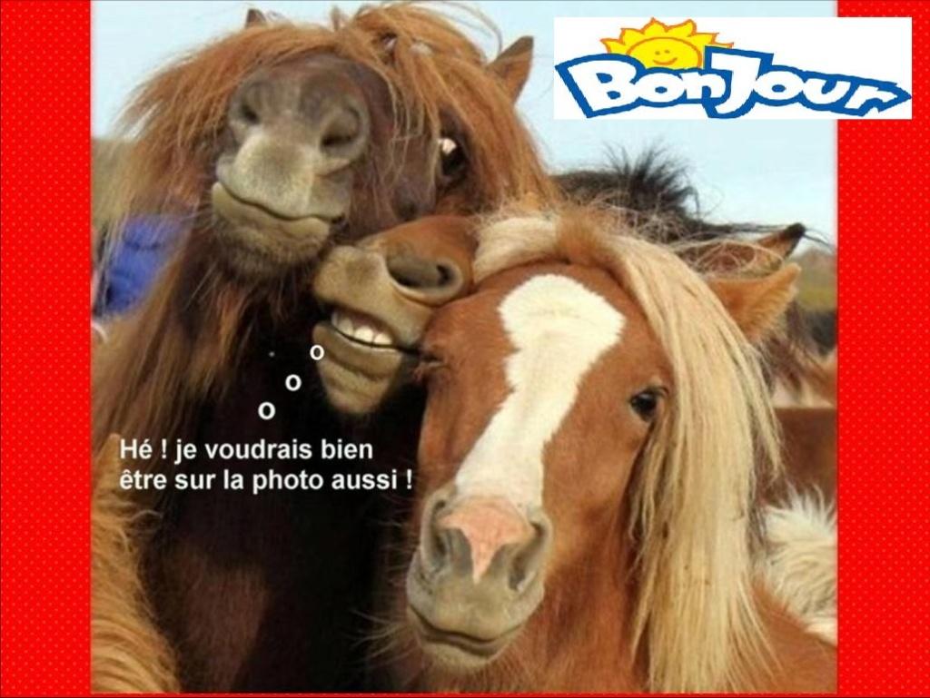 Nos amis, les animaux(quand ils font semblant d'être bête) - Page 9 Image112
