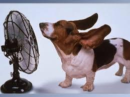 Nos amis, les animaux(quand ils font semblant d'être bête) - Page 9 Images42