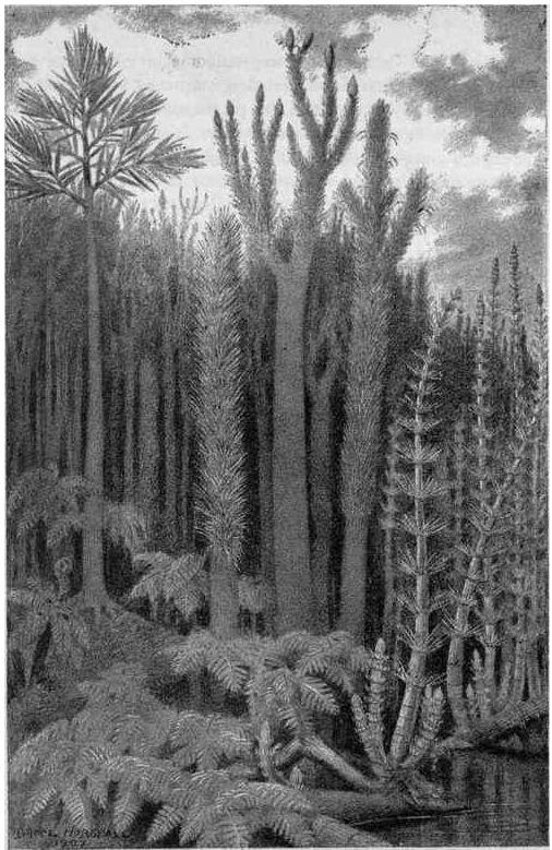 Représentation bidimensionnelle de la forêt houillère Cw11