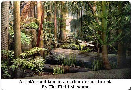 Représentation bidimensionnelle de la forêt houillère Cw210