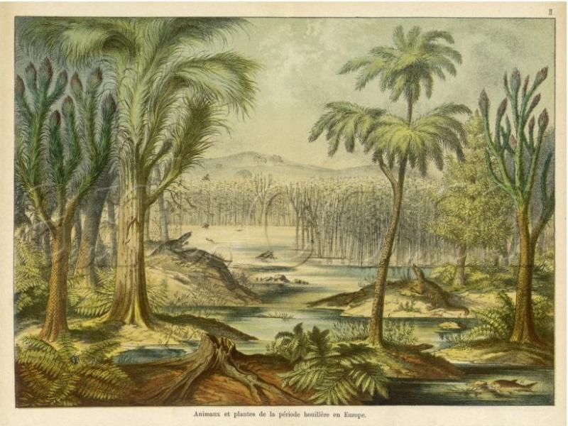 Représentation bidimensionnelle de la forêt houillère Cw310