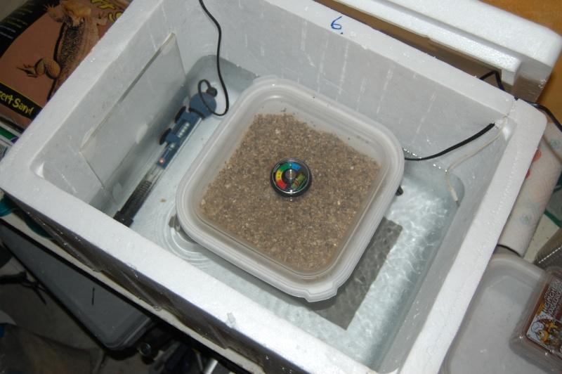incubateur Dsc_0017
