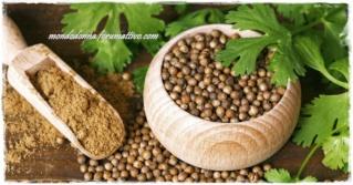 Coriandolo: le sue proprietà, calorie, utilizzo in cucina Tutte-10