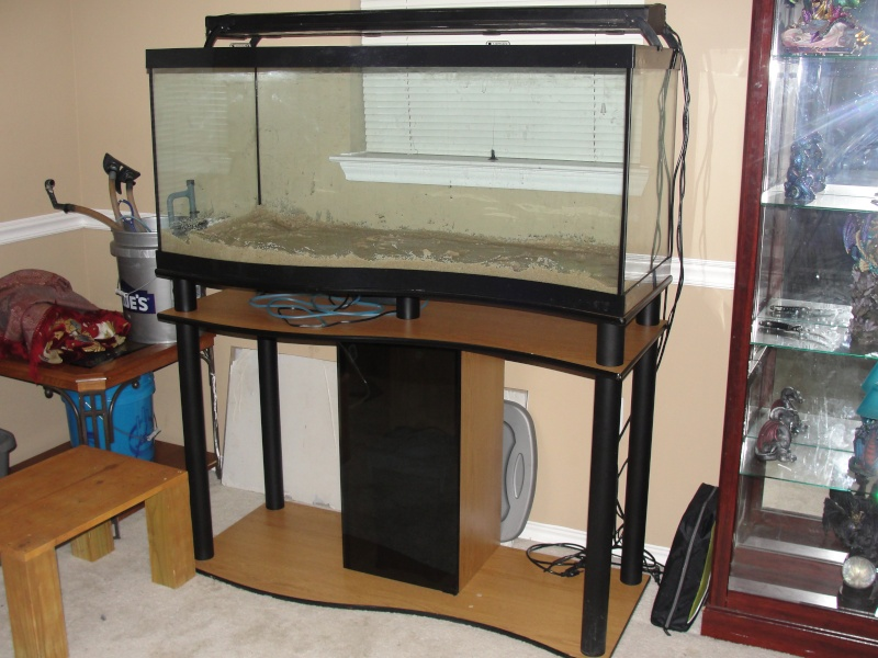 DISCUS TANK (FISH UPDATE) - Page 4 Dsc03312