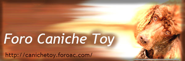 caniches toy Foro_c10