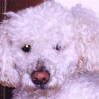 [Informe] El Lenguaje de los perros Suspir10