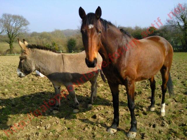 SAMARA - TF née en 2006 (DCD janvier 2019)  et OSCAR - âne né en 2003 - adoptés en mars 2012 par Maxime Photo015