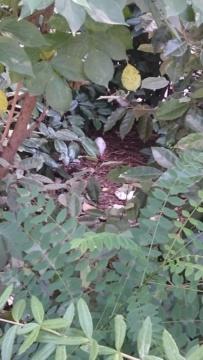 Rat blanc dans la rue Dsc_0312