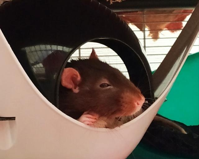 Rat épileptique Img_2014