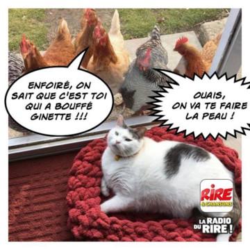 Nos amis, les animaux(quand ils font semblant d'être bête) - Page 8 Chat10