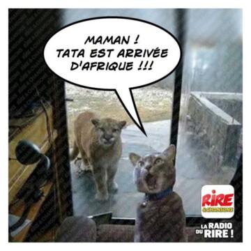 Nos amis, les animaux(quand ils font semblant d'être bête) - Page 9 Chat111